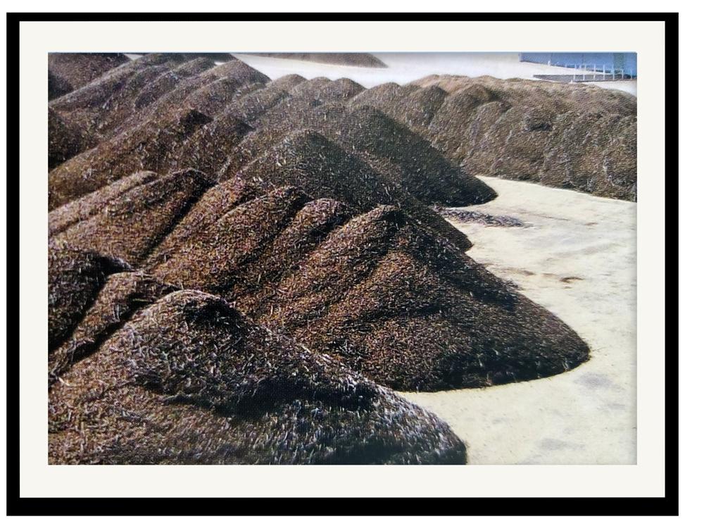 A bumper crop of pecans.